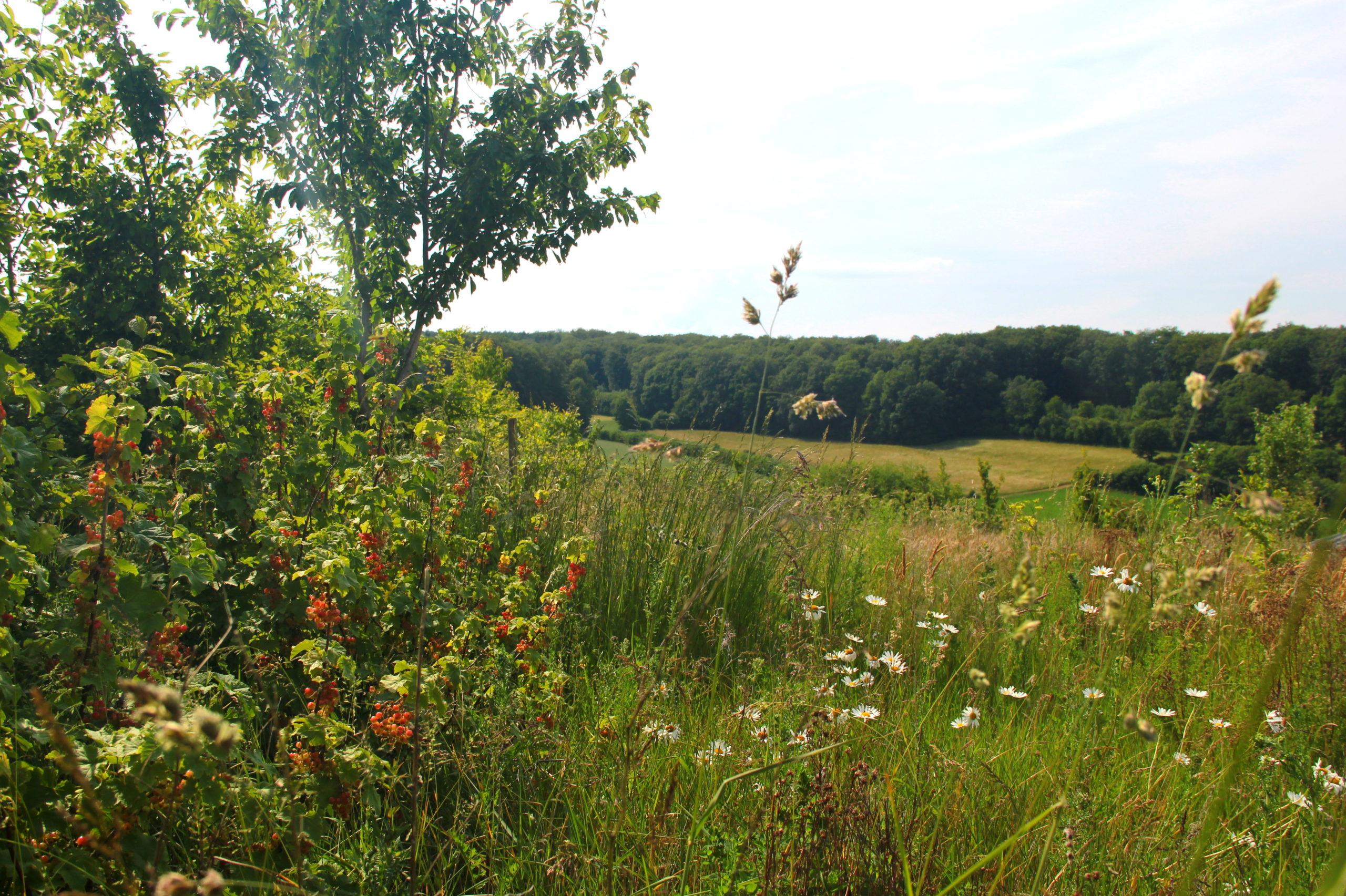 baies et fleurs en assocation sur le terrain de Canopée, coopérative en agroforesterie